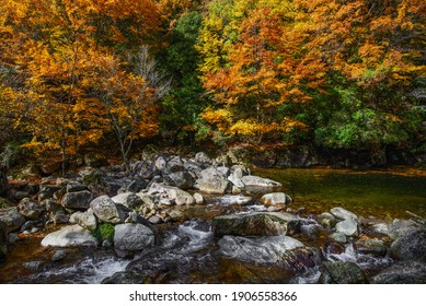 Red leaves, running water, stones in autumn park