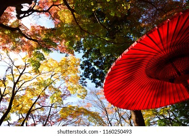 Red leaves and Umbrella
