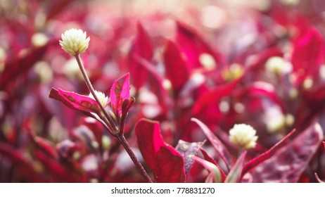 Red leaves macro poinsettia imgenes fotos y vectores de stock red leaves with white flowers mightylinksfo