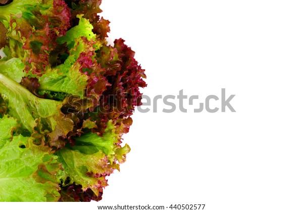 Red Lettuce Isolated on White Background Studio Photo