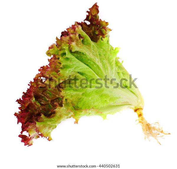 Red Lettuce Isolated on White Background Studio Photo