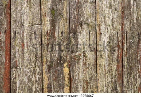 Red lichen on shelves of weathered wood