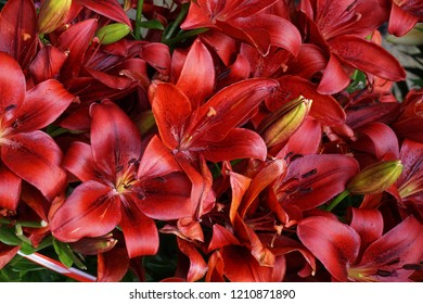 red lilly texture as very nice natural background