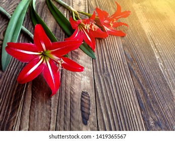 Red lily or amaryllis flower bouquet on wooden background. Amaryllis (Hippeastrums flower) or fresh red lily flowers from garden with green leaves. Red amaryllis - summer floral background, lily gift