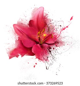 Red Lily Closeup On A White Background With Elements Of The Sketch And