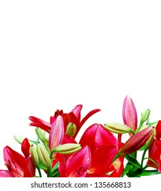 Red lily flowers isolated on white