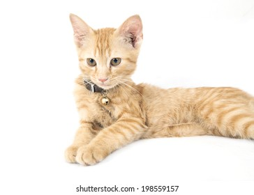Red little cat on the white background.