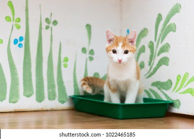 red little kitten is sitting in a cat's toilet of green color