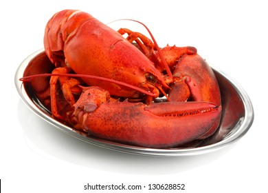 Red lobster on tray, isolated on white