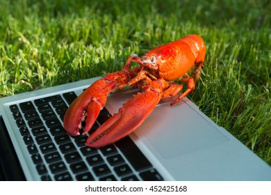 Red lobster typing at the laptop in the grass