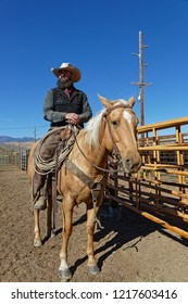 RED LODGE, MONTANA, September 21, 2018 : Mounted cowboy rassemble herd of cows to load big trucks, to conduct them to Nebraska for the winter.