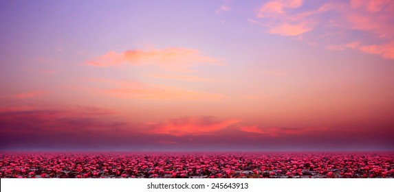 Red lotus pond in the nature in a wide horizon is located in Udon Thani, Thailand.