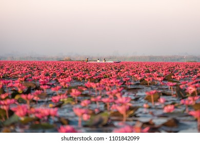 Red lotus sea is the most famous attraction of Udonthani, Located province in northeast region of thailand.