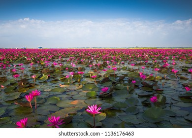 The Red Lotus Sea with the sky at Udonthani in Thailand.