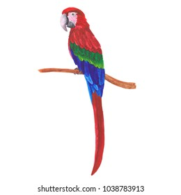 Red macaw parrot watercolor hand painted tropical bird, sitting on a tree brunch, realistic painting natural theme, raster illustration for book, card, pattern, advert, textile print, other design.
