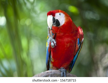 Red macaw parrot in the Xcaret. Mexico.
