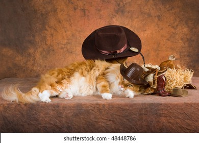 Red Maine Coon with cowboy hat, spurs, saddle, on brown mottled background