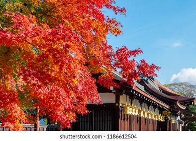 Red maple branch against blue sky in front temple roof, sun shine to golden lantern hanging along wood building in autumn season, Japan.