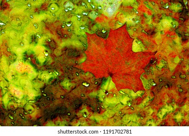 Red maple leaf close - up in bright multi-color abstraction.