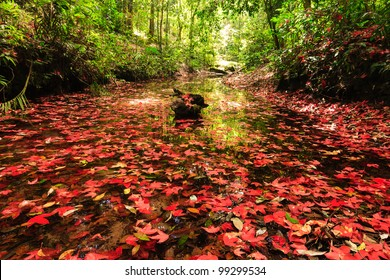 Red maple leaf during fall at Phukradung National Park, Loei, Thailand.