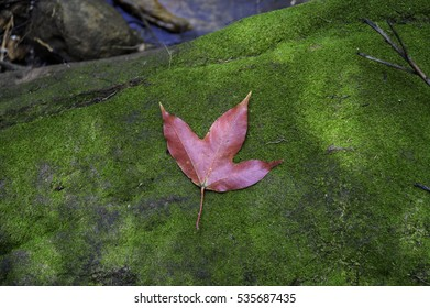 Red maple leaf fall on ground during autumn.