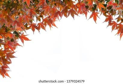 Red Maple Leaf Frame On White Background