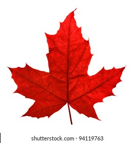 Red maple leaf, isolated on white
