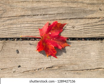 Red maple leaf on wooden planks background