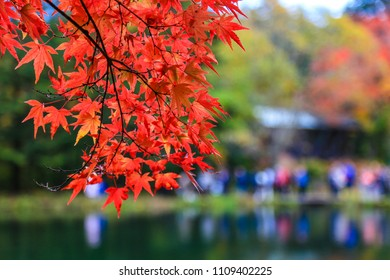 Red maple leaf shown the peak of fall foliage in Kumobaike, Karuizawa. The most wonderful pond in the area. You will see from mid to late October.