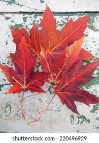 Red maple leaves in autumn on grunge picnic table