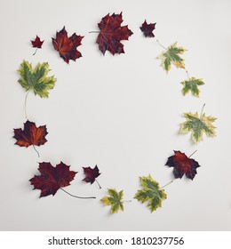Red maple leaves circle on white background. Fall season. Maple leaves circle, great design for any purposes. Autumn nature.