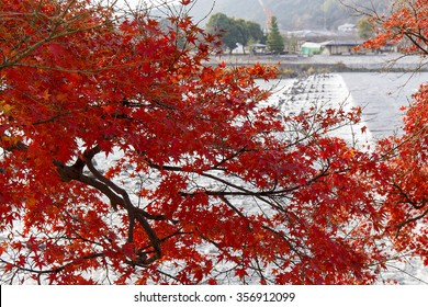 Red Maple leaves in Kyoto, Japan