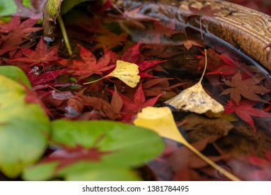 Red maple leaves and yellow ginkgo leaves fallen on a stone pot filled with water