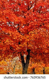 A Red Maple Tree at Maplewood Cemetery at Harrison, Arkansas in Autumn