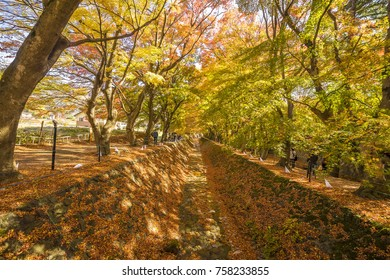 Red Maple Tree tunnel  at park in Japan