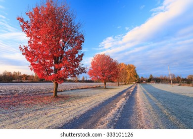 Red maple trees in a frosty sunny fall morning in rural Ottawa