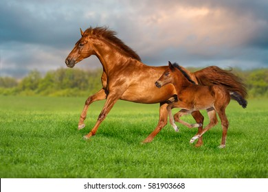 Red mare with colt run on green grass against beautiful sky