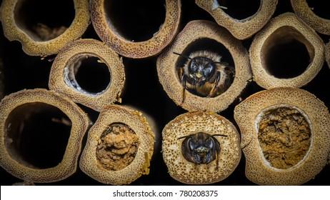 mason bee images stock photos vectors shutterstock