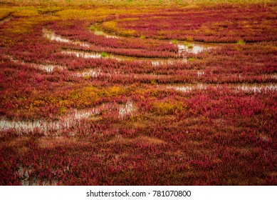 Red moss at Lake Notoro, Hokkaido, Japan