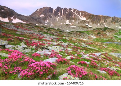 Red mountain flowers scattered on green slope