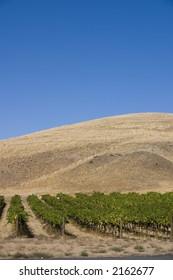 Red Mountain vineyard