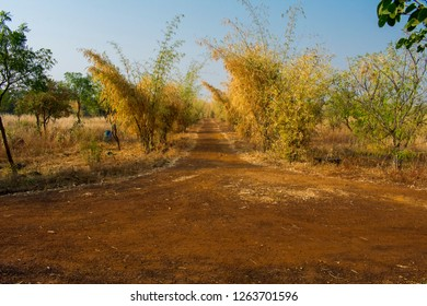 Red mud road, pathway  s rounded by bamboo