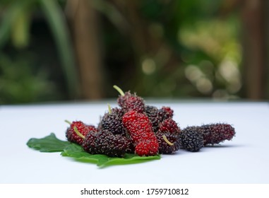 The red mulberry lays on the leaves and the white background is blurred, Mulberry contains very high levels of anthocyanin, which helps to fight free radicals.
