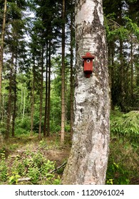 Red nesting box on birch tree trunk in the middle of the forest in summertime.