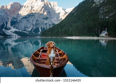 red Nova Scotia Duck Tolling Retriever at the Lake Braies mountain lake in Italy. hiking and traveling with a dog.