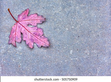 Red oak leaf against a gray concrete background. The leaf fell out of the tree during the autumn season. It can serve the concepts of change, funeral and or loneliness