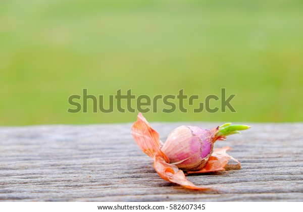Red onion on wooden and green background. Selective focus shallow DOF