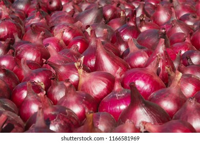 Red onions in plenty is on drying in the open air