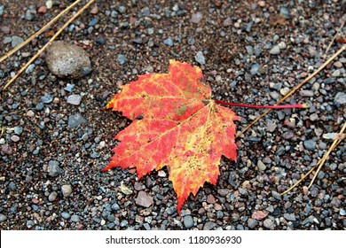Red and Orange Autumn Leaf Laying on Gravel