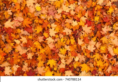 Red and orange autumn leaves background. Outdoor. 				Colorful backround image of fallen autumn leaves perfect for seasonal use. Space for text.